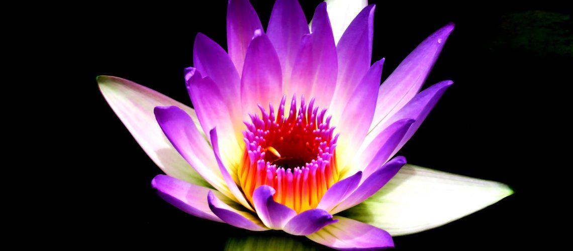 Lotus-photo-515631